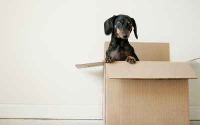 Practical Tips for Making a Smooth Transition to a New Home