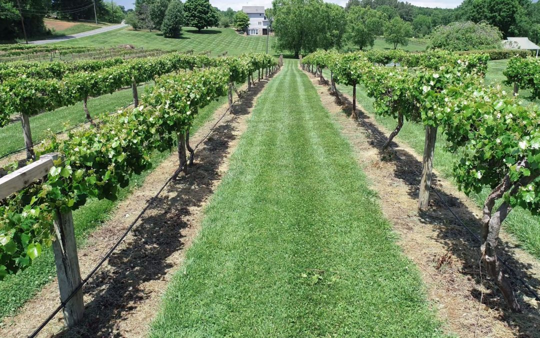 Established Profitable NC Vineyard, Winery & Retail Business For Sale!
