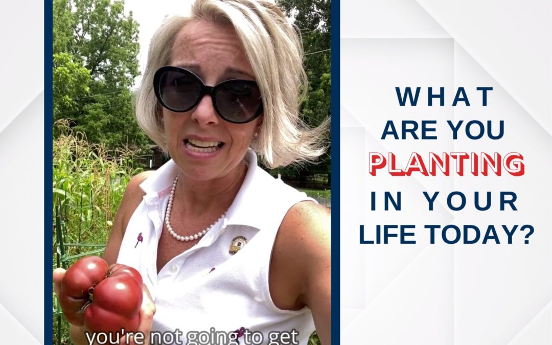 What Are You Planting In Your Life Today?